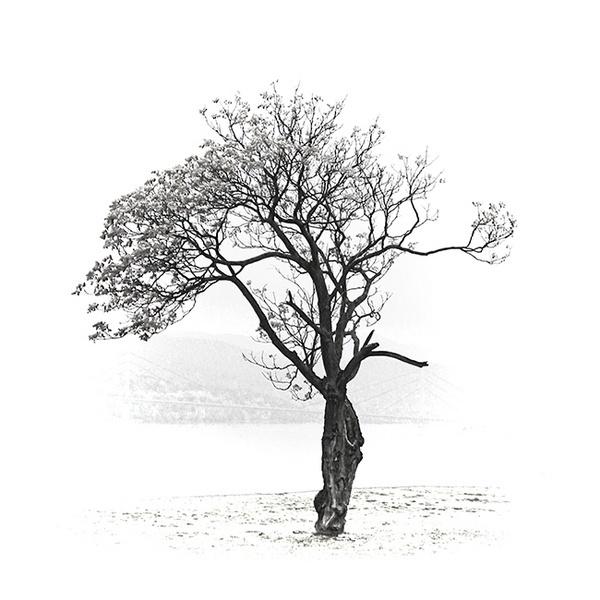 The Tree of Memories by Boris_MB