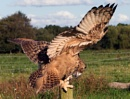 Eagle Owl by bppowell
