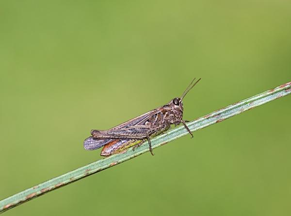 Cricket by Trev_p