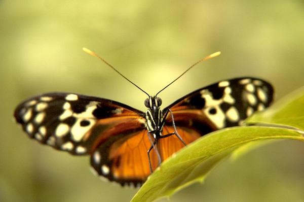 Butterfly by wheeldon