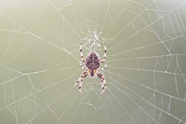 spider macro help.. by julzt