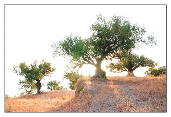 trees by zebhylon