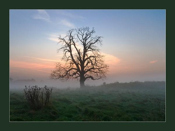 Tree by baldsparky