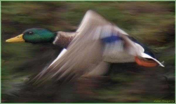 in flight by Mikelane