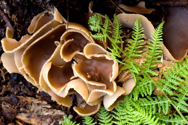 Fungi 1 by ABiggs