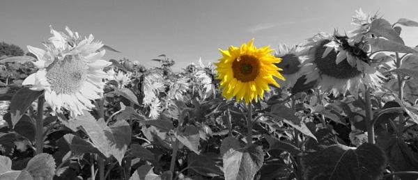 On a grey day. . . by Birdseye