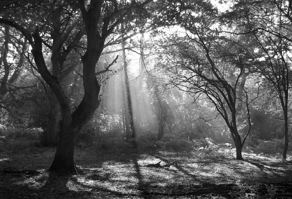 September Morning by royalblue