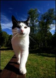 Arthur the Cat
