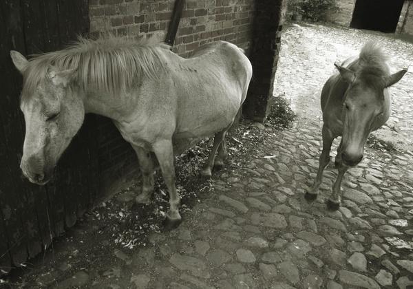 Sleeping Horses by jon1973