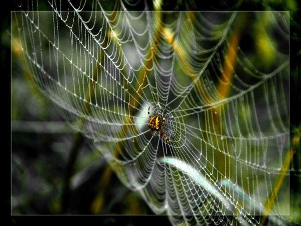 Cobweb by ptdigital