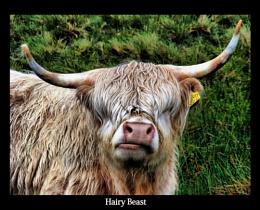 Hairy Beast