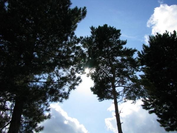Thro\' the trees...again by LindaSJ