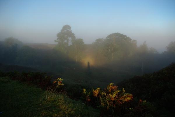 Morning Glory by DaveH64