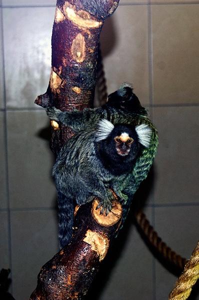 monkey business by geosami