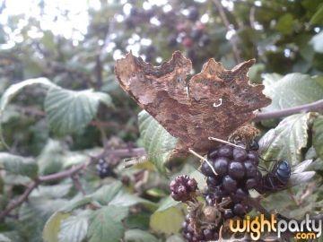 butterfly by stellabella