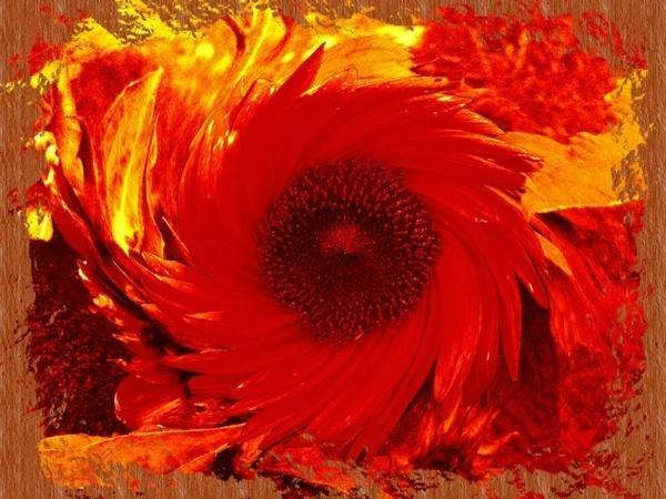 Sunflower Swirl by Alexhew