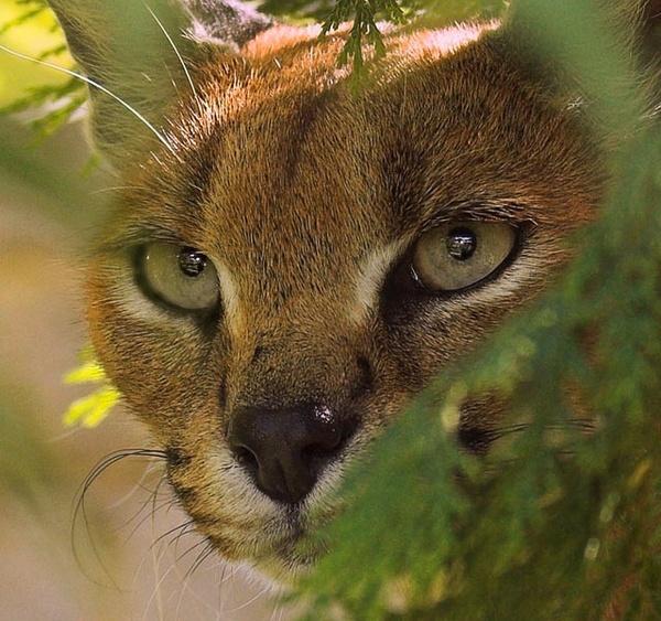 Cat..............? by Karrol