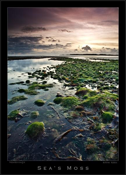 Sea\'s Moss by sherlob