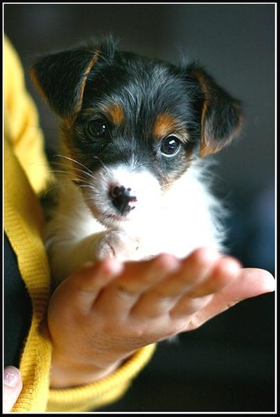 Bertie the Doggy by tatkinson1983