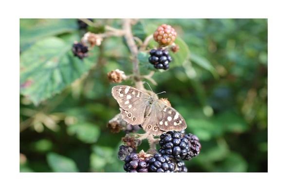 Fruity Butterfly by mollye
