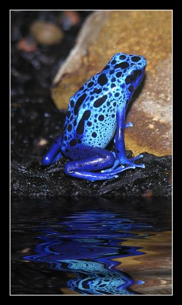 Blue by Boagman65