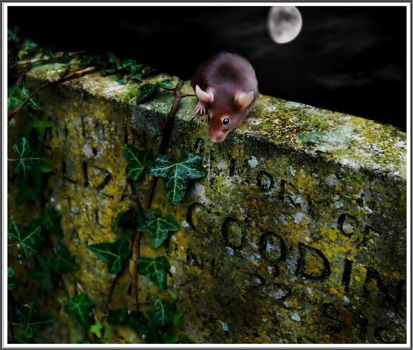 Churchyard Mice by imander