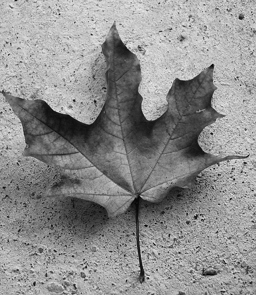 leaf macro by gothicboy