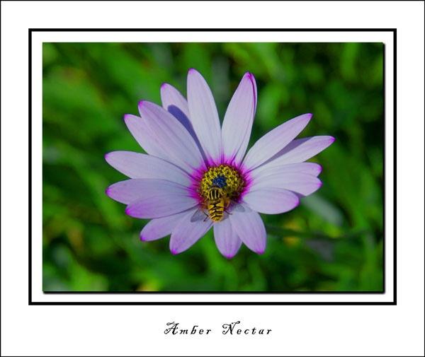 Amber Nectar by RAYMO