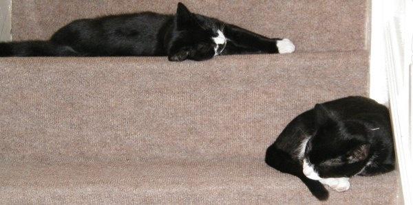 Geometric cats by Mintakax
