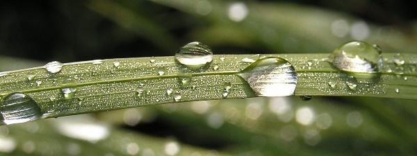 Diamond Drops by Mintakax