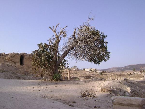 Ruins by carylofarabia