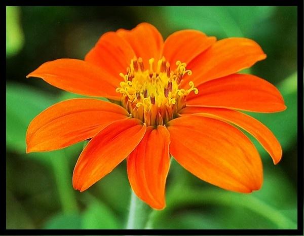 Beautiful Orange Flower by mrsvee