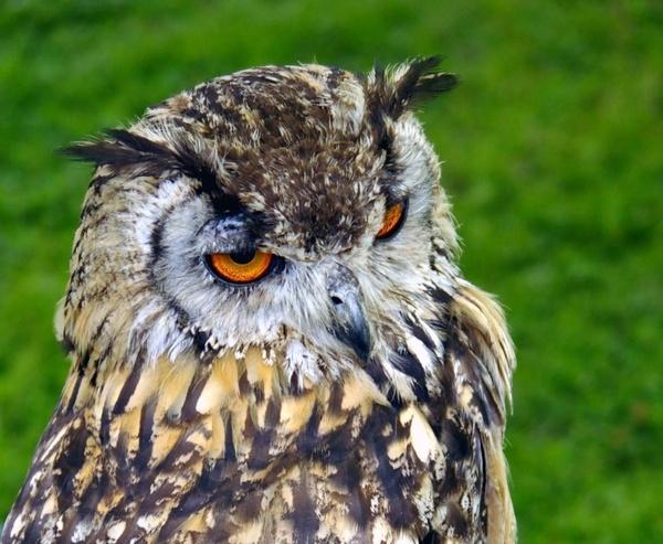 wise owl by Mynett