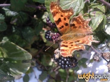 butterfly open by stellabella