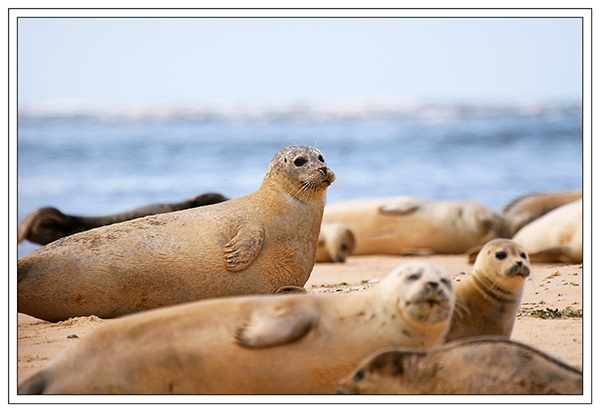 Blakeney Seals by theblindman