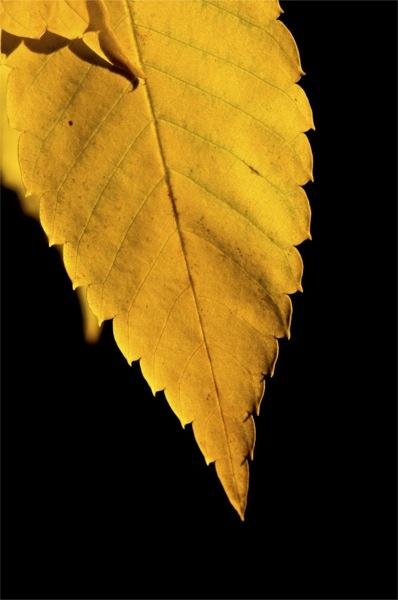 Golden by DarrenSmith