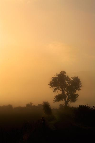 Misty Tree by ali graham
