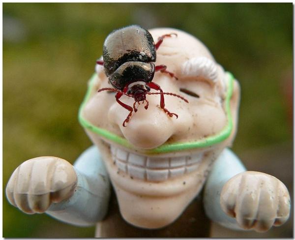 Old bug-er by bunbeam