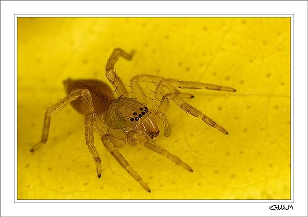 Spider by essien
