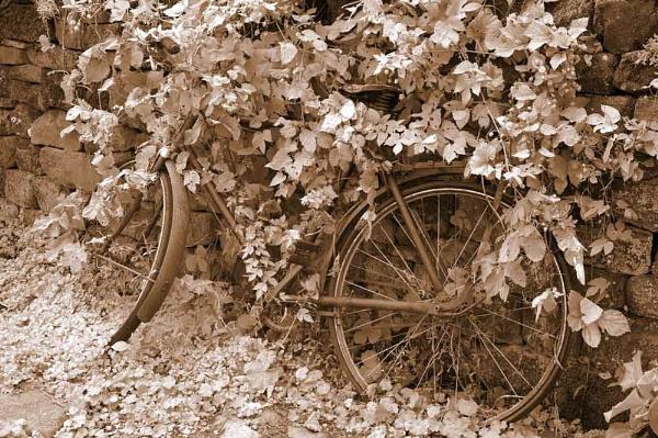 Sepia bike by Barbaraj