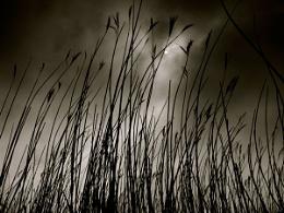 Reeds eye view