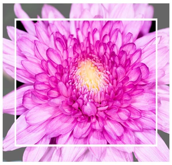Lilac lovely by Stuart463