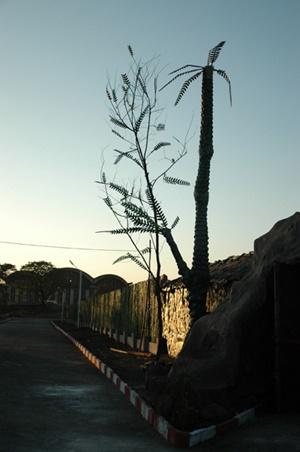 Landscape by sunayana