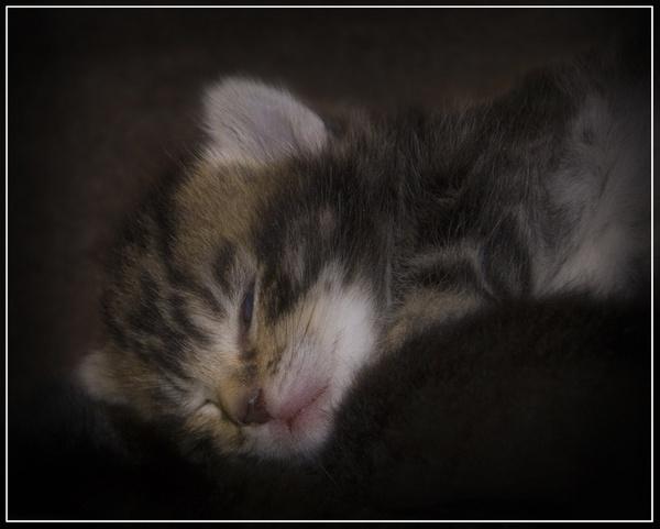 Sleepy Kitty by cirrusminor