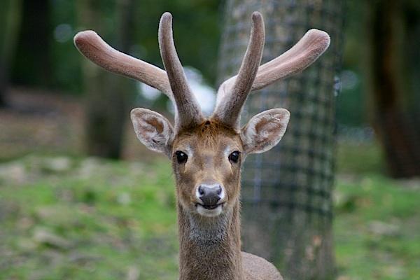 Deer by MikePeel