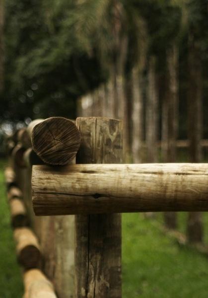 Wood by crispf