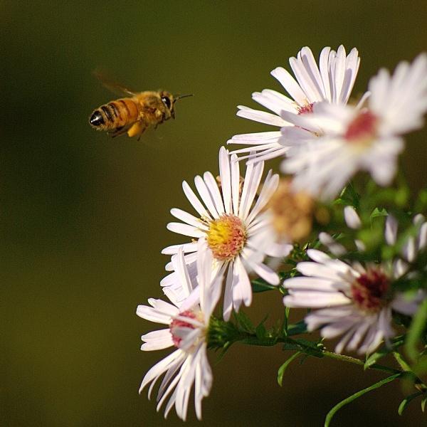 landing bee by piotro