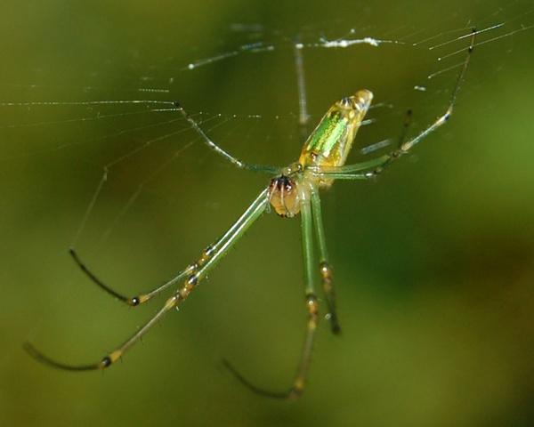 A Green Spider by konu