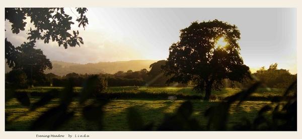 Evening Meadow by Mynett