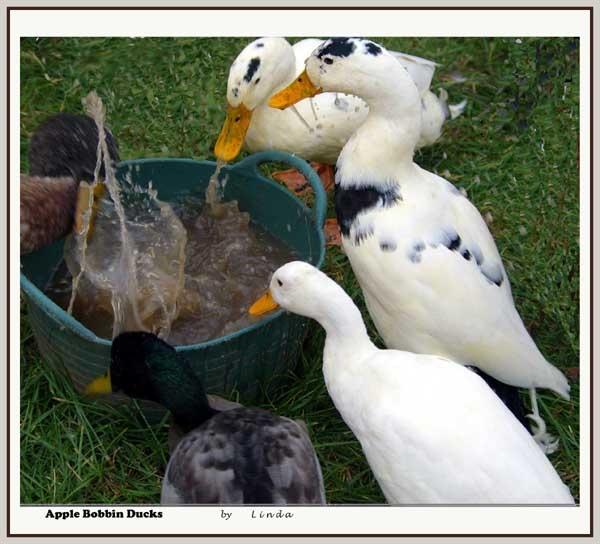 apple bobbin ducks by Mynett